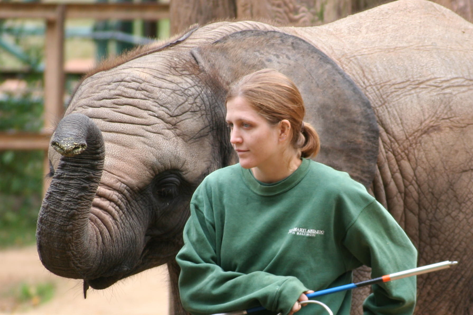 Baby_elephant_and_zoo_keeper_-Maryland_Zoo-8a